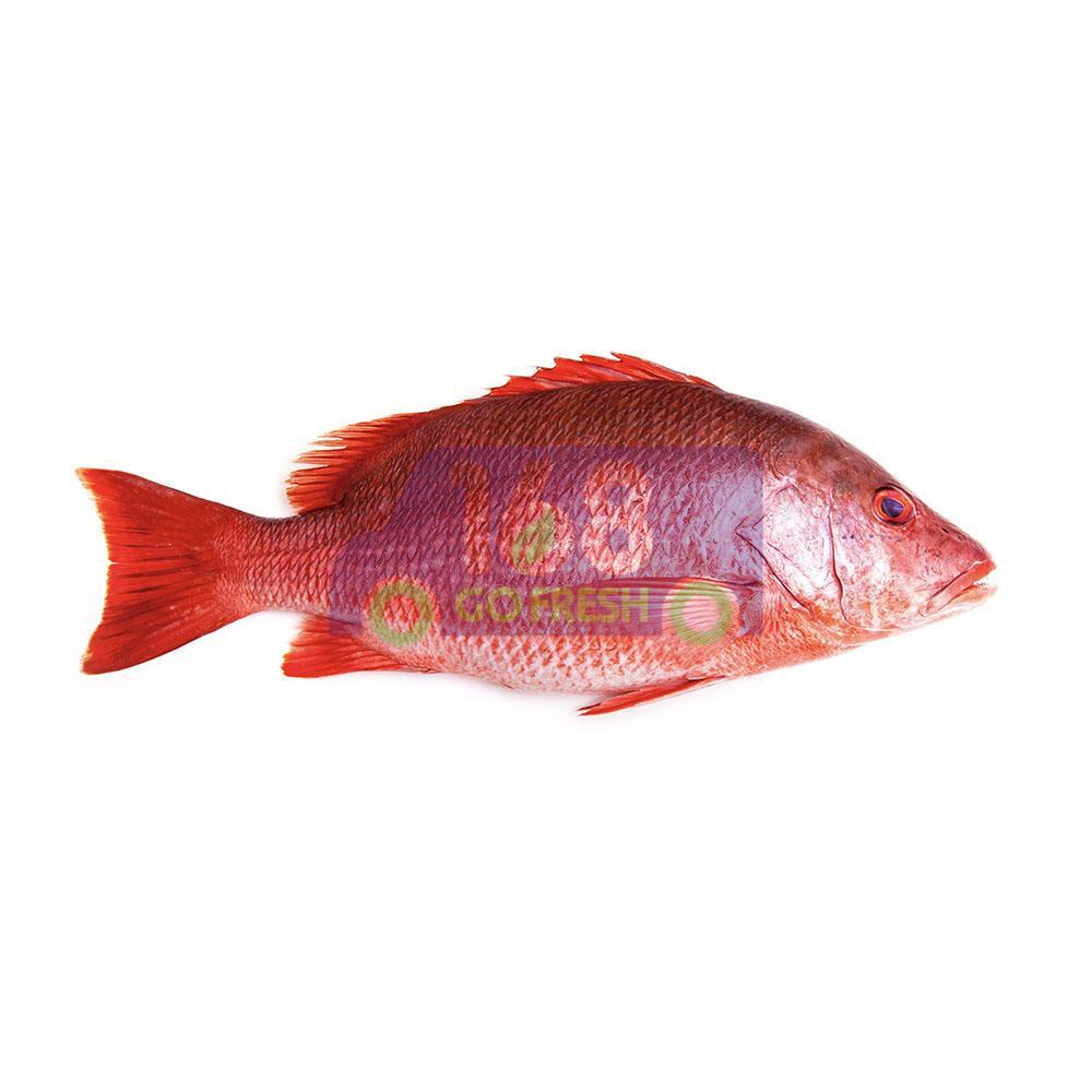 Red Snapper 红杉鱼(去肚)(一份2.4-2.9LB)