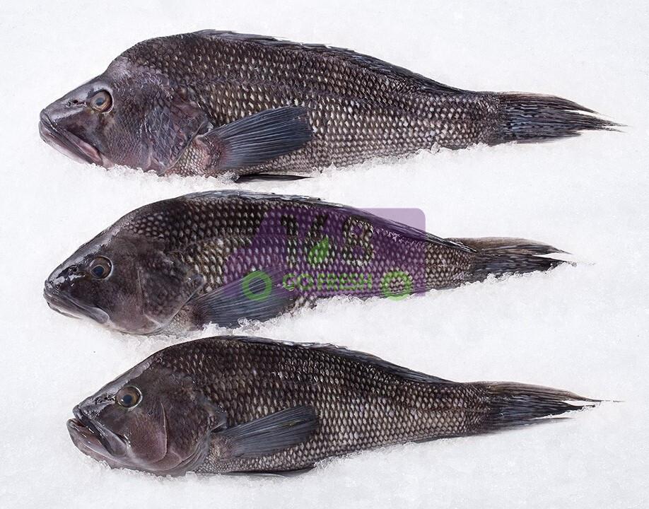 Wild Black Sea Bass 新鲜野生黑海鲈鱼(去鳞去肚)(1.5-1.6LB)