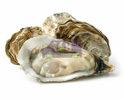 Big Oyster With Shell 单只带壳大生蚝(蠔)