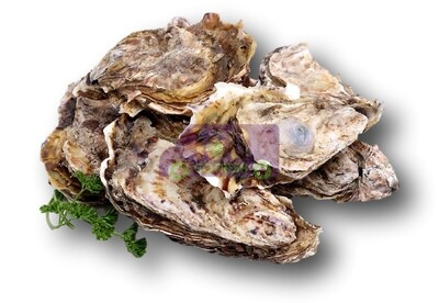 [LIMIT TIME SALE 限时特价]Oyster With Shell(12 Counts) 带壳小生蚝(蠔)(12只)
