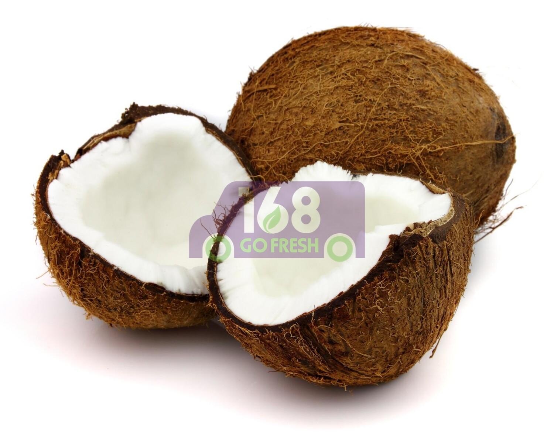 Brown Coconut  老椰子(单个)