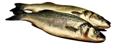 Bronzini European Seabass 欧洲海鲈魚