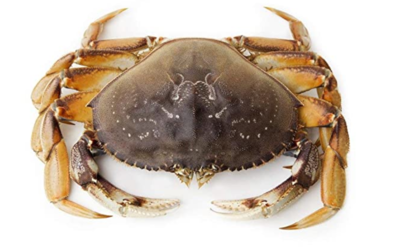 [LIMIT TIME SALE 限时特价]Live Dungeness Crab 活温哥华蟹