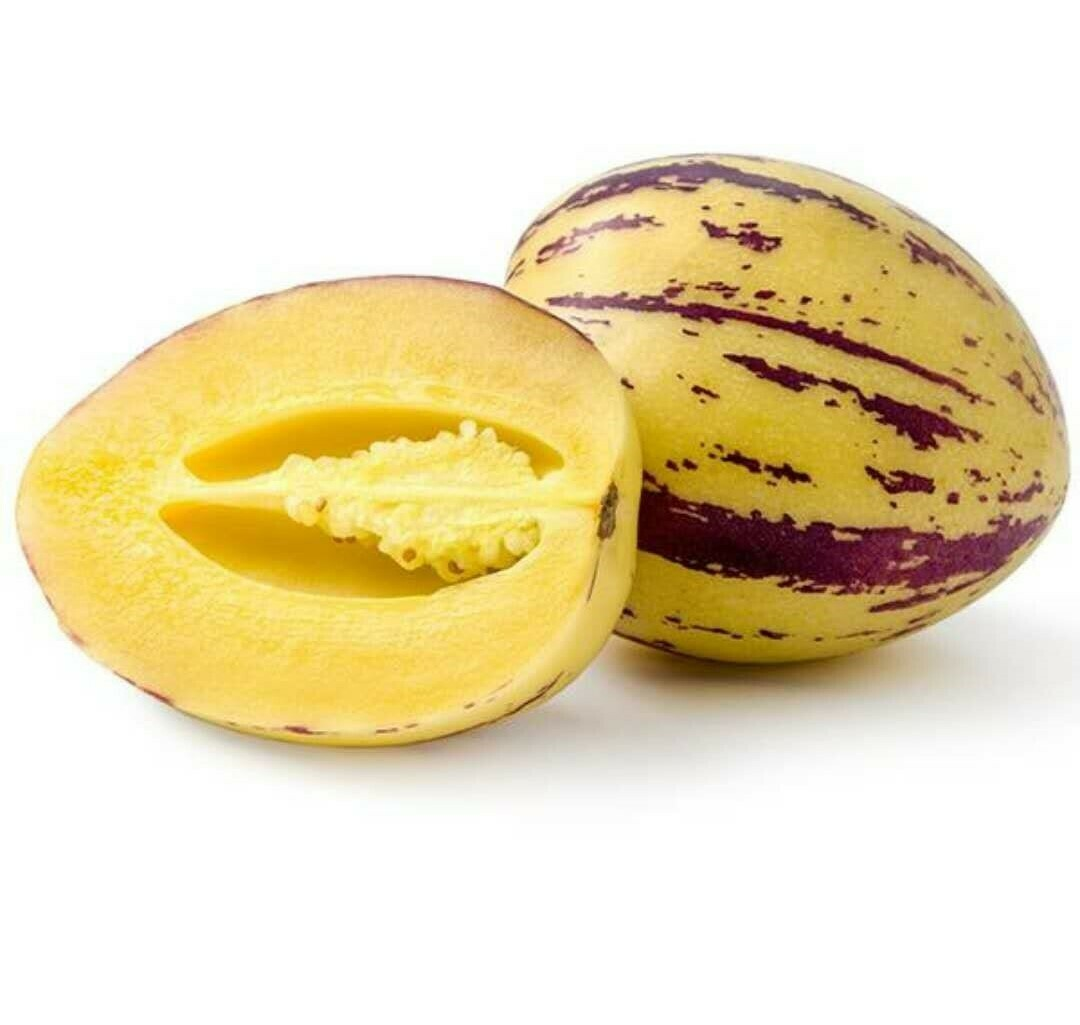 Pepino Melon (1 Count) 香瓜茄 (1个)
