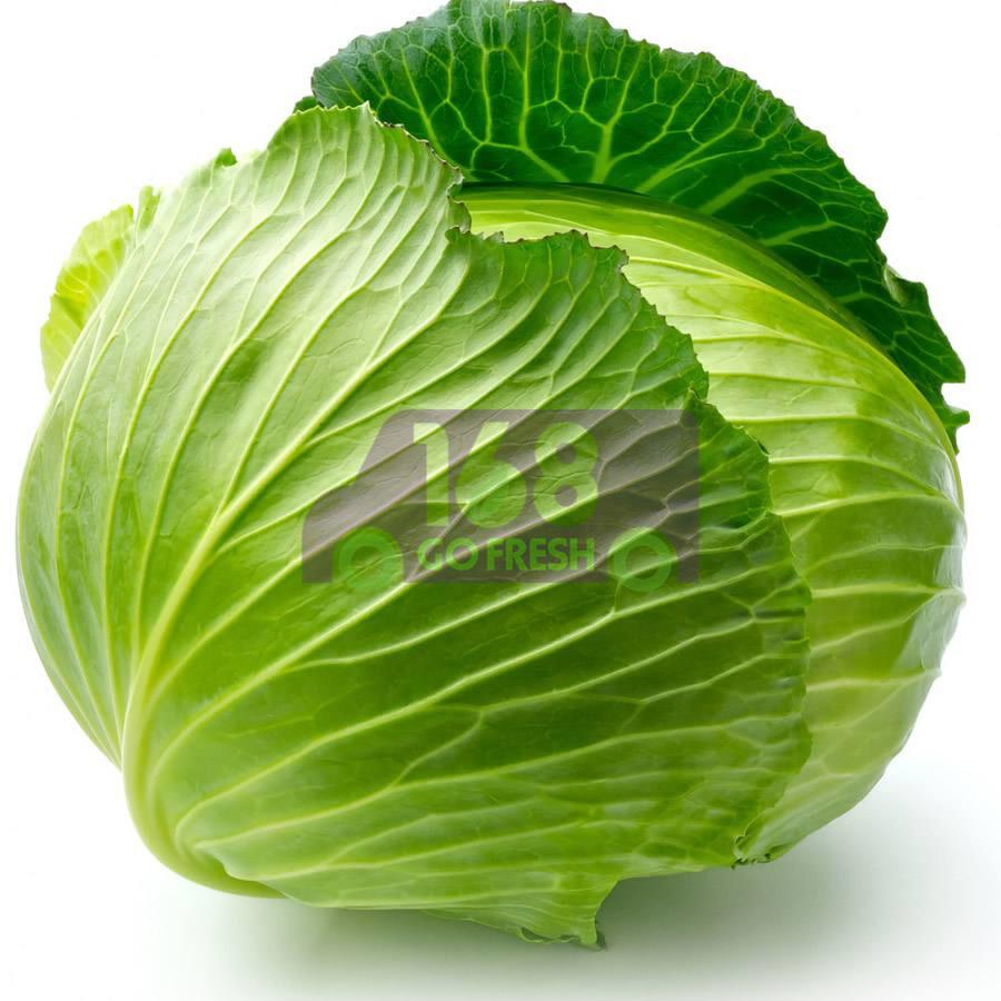 Taiwan Cabbage 台湾高丽菜(4-4.5LB)