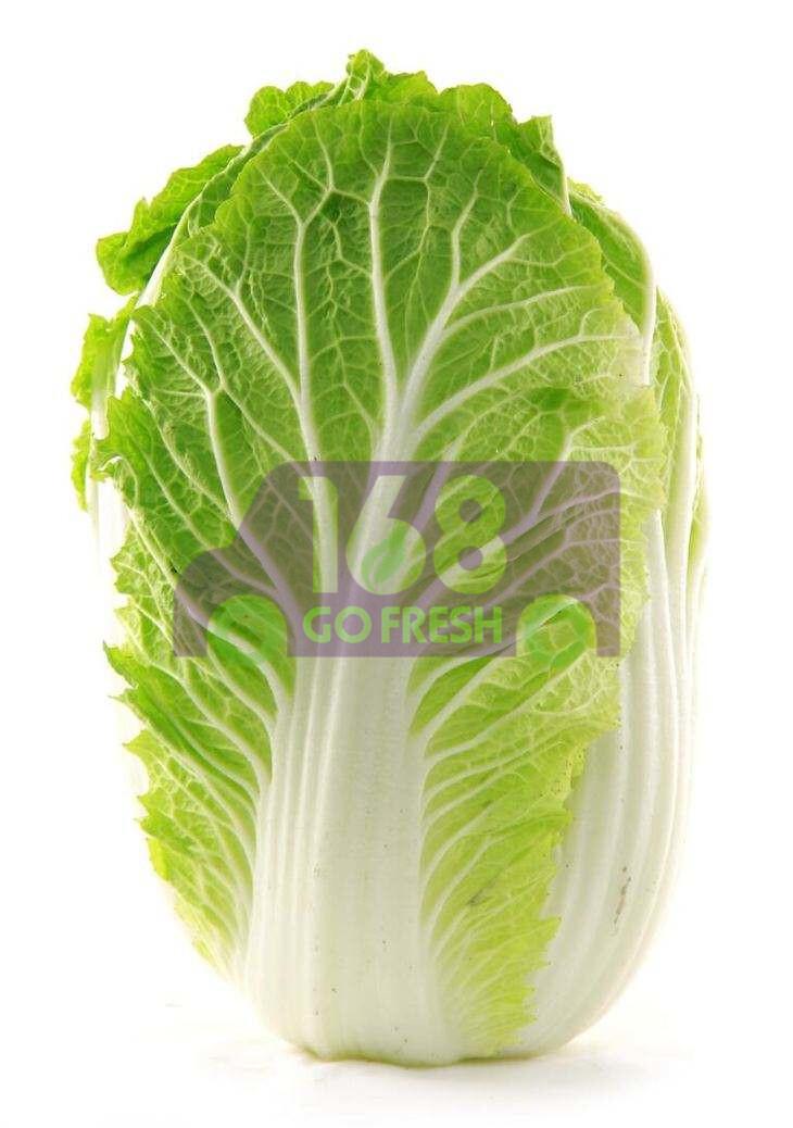 Napa Cabbage (1 count) 绍菜/大白菜 (1棵) 约4LB