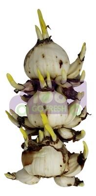 Daffodils 水仙花头(3个装)