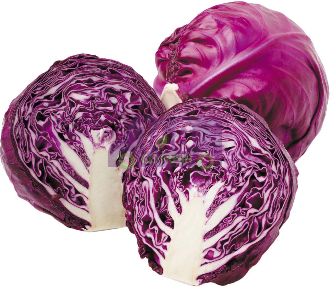 PURPLE CABBAGE 紫心包菜
