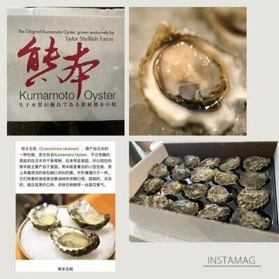(预定供货时间是星期五 六 天 一)Kumamoto Oysters 熊本生蚝(蠔)(6只)