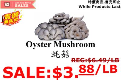 [LIMIT TIME SALE 限时特价]Oyster Mushroom 蚝菇 1 LB