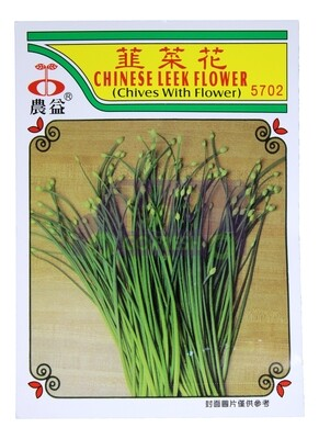 (SEED 种子)Chinese Leek Flower  韭菜花 5722