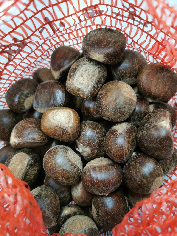 Fresh Chestnut 板栗(栗子) (1.5LB)