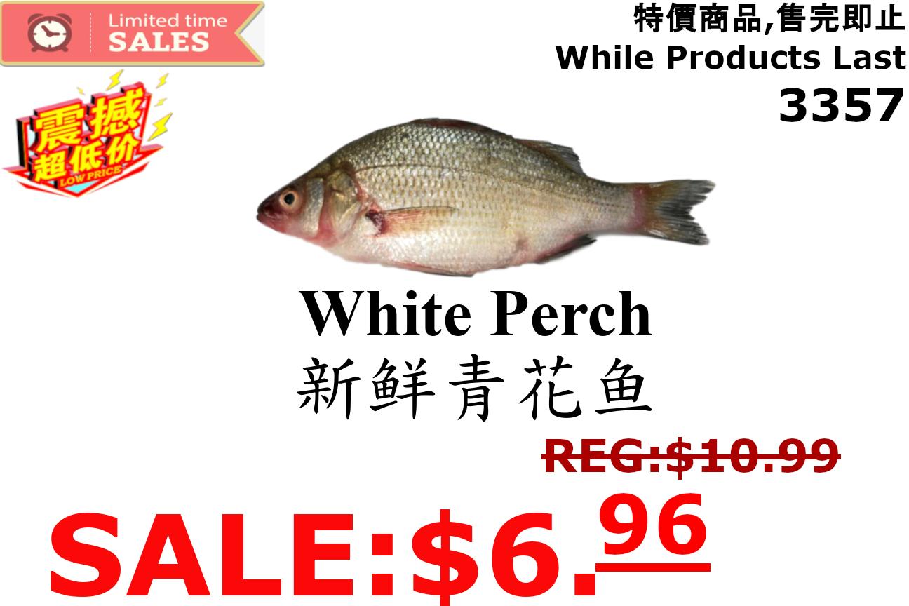 [LIMIT TIME SALE 限时特价]  Fresh White Perch(一份) 新鮮青花鱼(一份)1.8-2LB