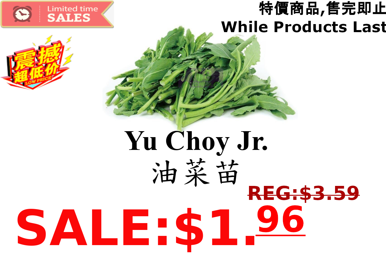 [LIMIT TIME SALE 限时特价]Yu Choy Jr 油菜苗(1.8-2LB)