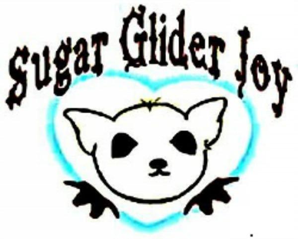 Sugar Glider Joy Online Store