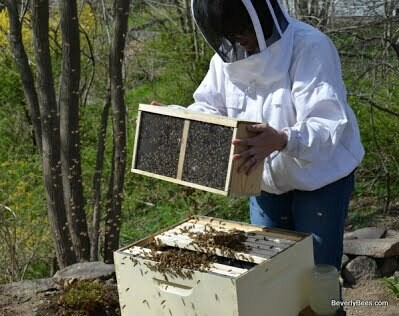 May 8th Homeschool Day (1-3pm) - Honey Bee Package Update