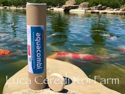 batteri depuranti in compresse specifico per il fondale Aquacombi