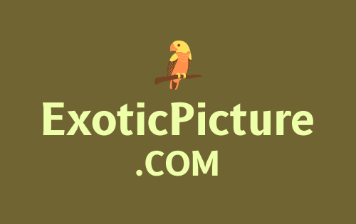 ExoticPicture .com is for sale
