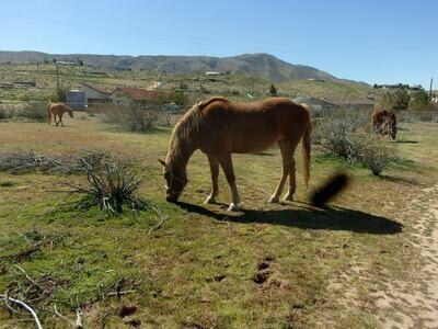 Wellness Consultations -Equine