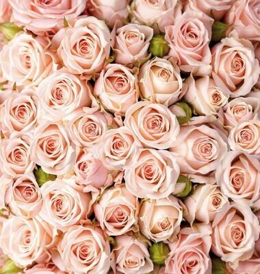 Розы. Х 5