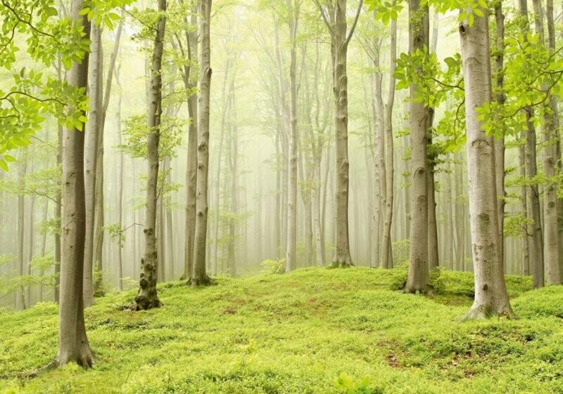 """Весенний лес. Х 5 """"Люкс""""фотообои""""ТП"""". 9 листов, размер 291 х 204 см"""