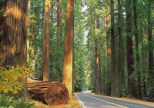 Дорога в лесу. Красивые фотообои природы. Размер: 291х204см