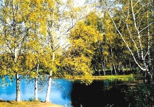 Осенний пруд. Фотообои осени. Размер: 291х204см.