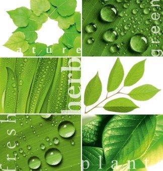 Зеленая мозайка. Фотообои. Размер: 194х204 см.