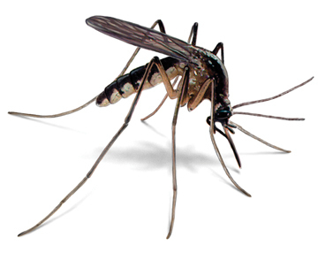 Mosquito Control Program - Call 716-692-4433 for Quote