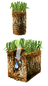 Core Aeration with seed for lawns under 2000 sq ft. For lawns larger click on Buy Now and a popup will ask for the size