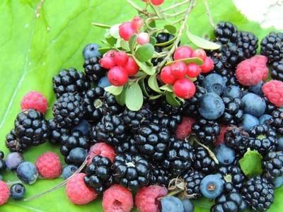 Ароматизатор пищевой Лесные ягоды