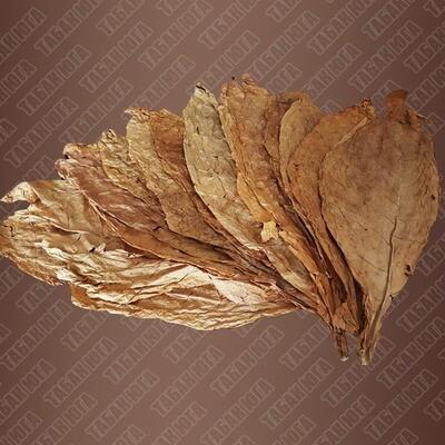 Кубан Криолло (Cuban Criollo) лист