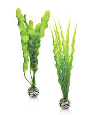 Växtset Grön Medium 2 st