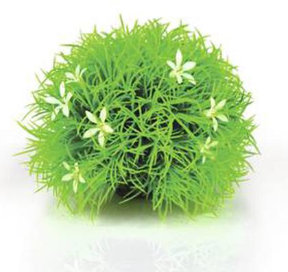 Växtboll Gässblom