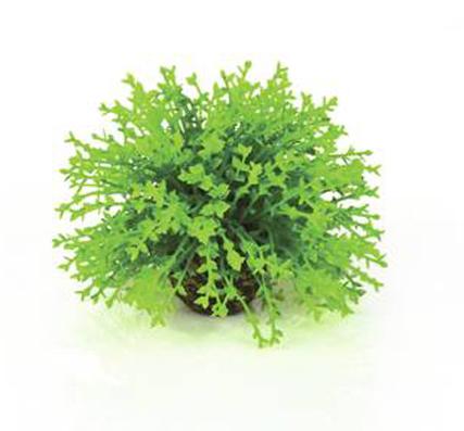 Blomboll Grön