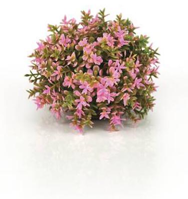 Blomsterboll Rosa