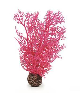 Hornkorall liten rosa