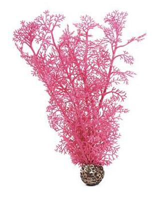 Hornkorall medium rosa