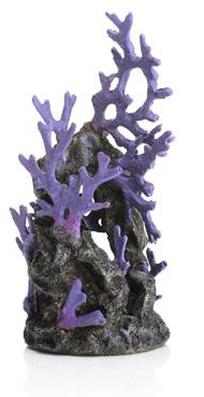 Korallrev lila
