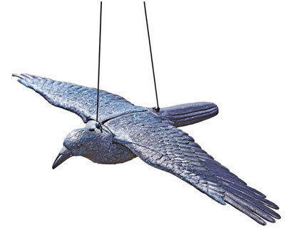 Flygande Korp
