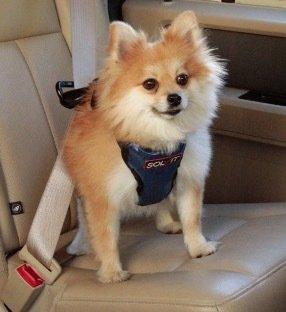 豪華版寵物車用安全帶 ( 尺寸S號 )