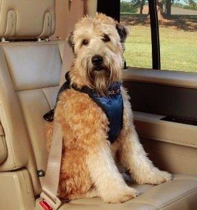 豪華版寵物車用安全帶 ( 尺寸M號 )