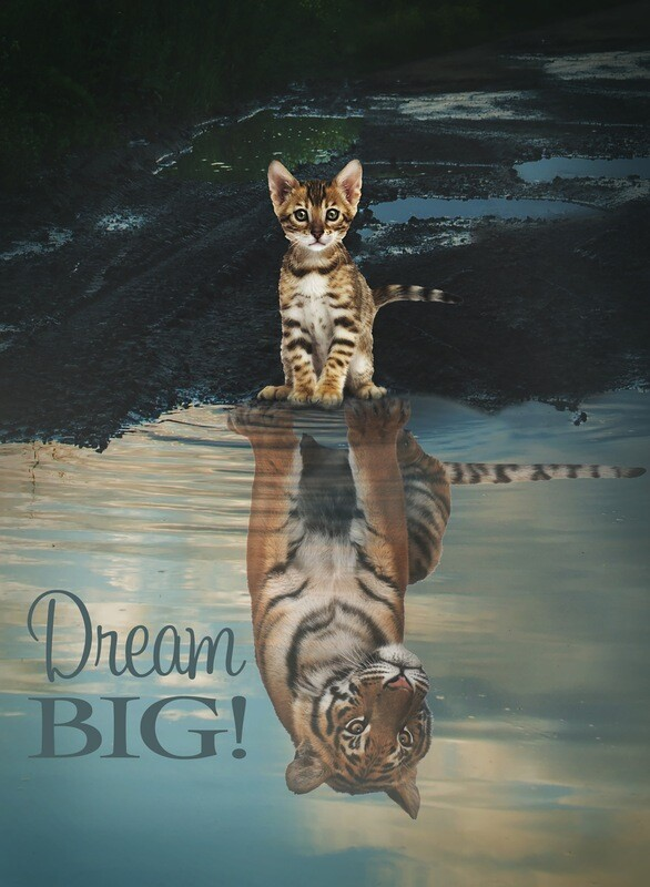 Life of Whimsy // Dream Big