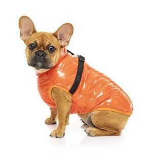Tangerine Calabasas Jacket