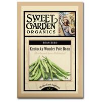 Kentucky Wonder Pole Bean