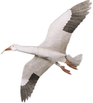 Snow Goose Assembled