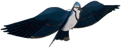 Blue Jay Assembled