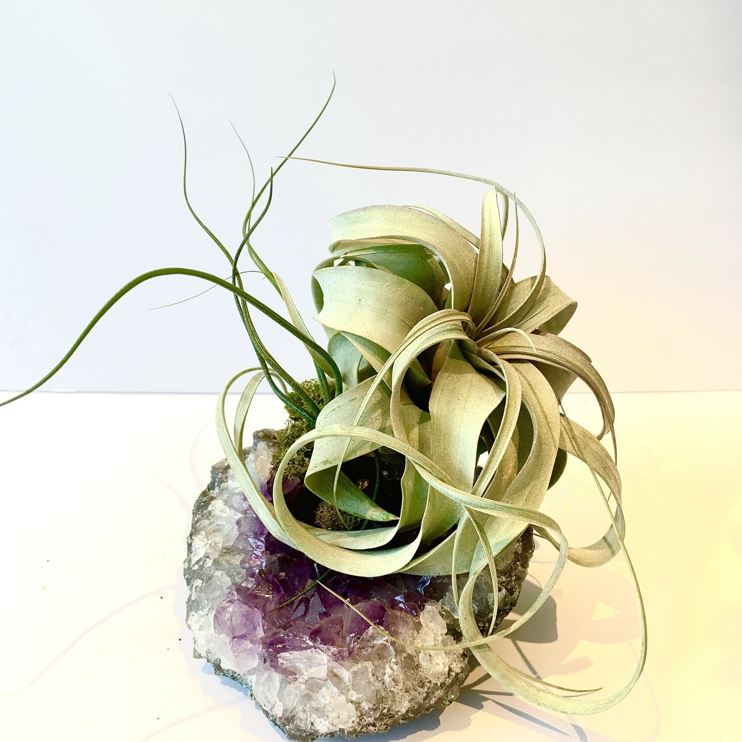 QUEENDOM  Amethyst Crystal x Air Plant Tillandsia Xerographica and Butzii