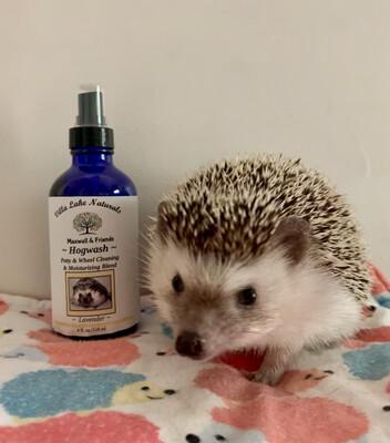 Maxwell & Friends Hogwash Potty and Wheel Rub ~ Lavender  4 oz.
