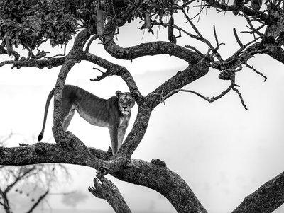 Haut perché - Tanzanie 2016